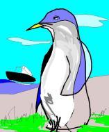 Pinguino signorino
